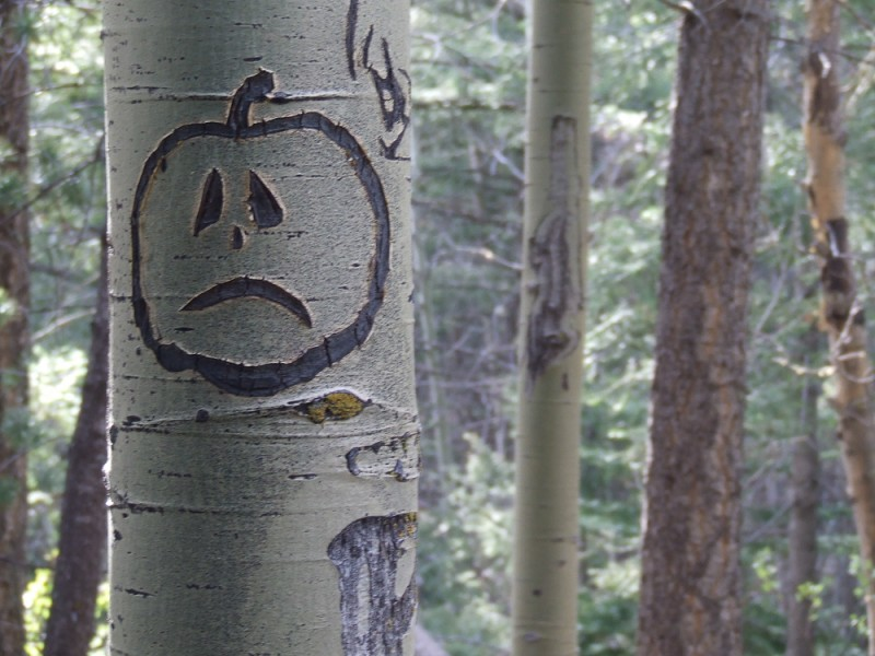 Although technically a hardwood, aspens are relatively soft and can easily be carved.