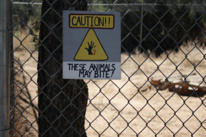 Sign outside the Coyote enclosure warns visitors not to get too close. Photo by Charlotte Renken