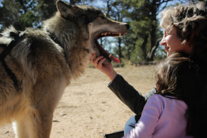Corine Frankland and Rosa Martinez get an close encounter with Zeorro the wolf-dog. Photo by Charlotte Renken
