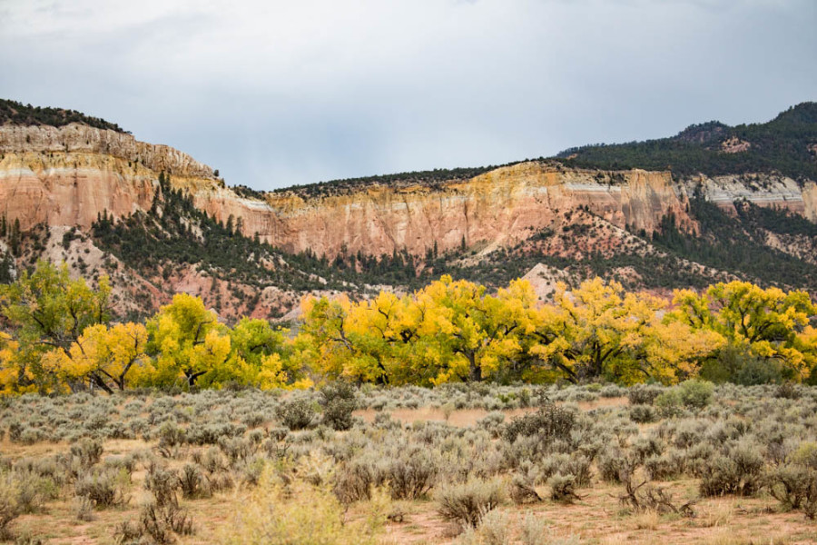 Fall colors add to the beauty of the Chama River Valley. Photo credit: Chris Dorantes