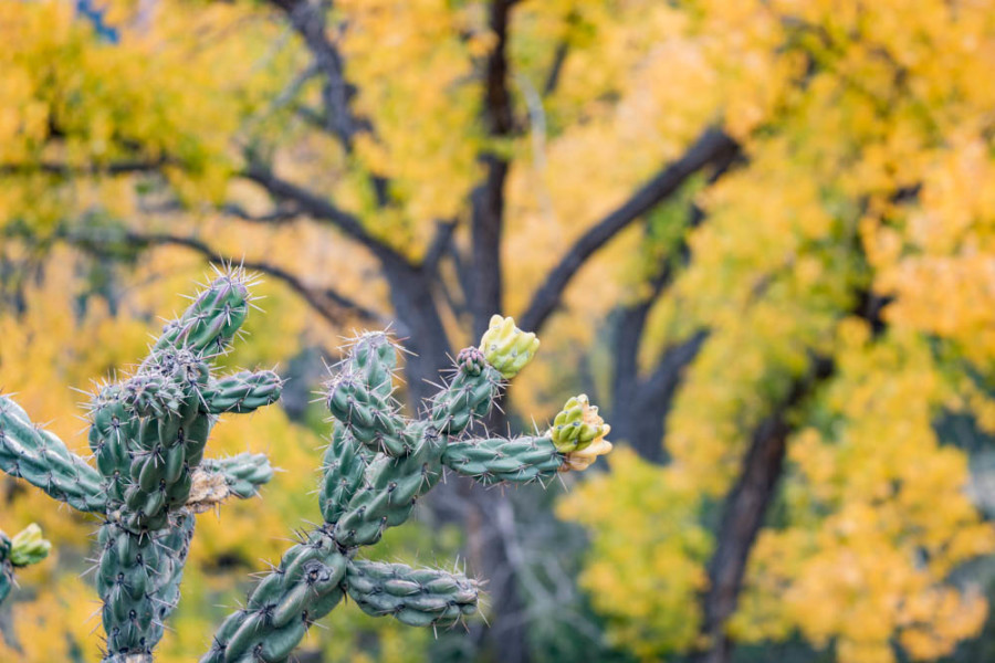 Cactus are part of the diverse ecology along the Chama River Valley. Photo credit: Chris Dorantes