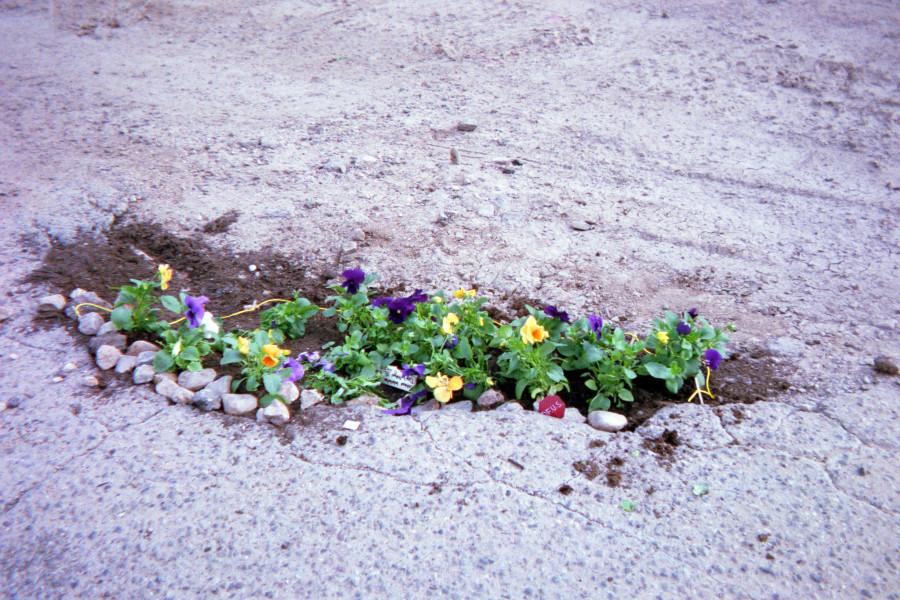 Whitney Wernick used annual flowers to fill the potholes around SFUAD's campus.
