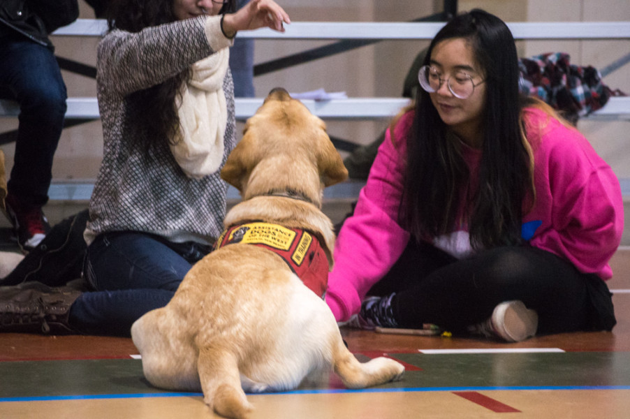 All the dogs that visited campus were service dogs and very well-behaved. Photo by Jennifer Rapinchuk.