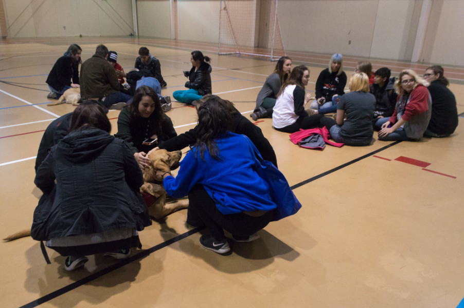 Circles of students sit patiently waiting for a dog to take initiative and join them. Photo by Jennifer Rapinchuk.