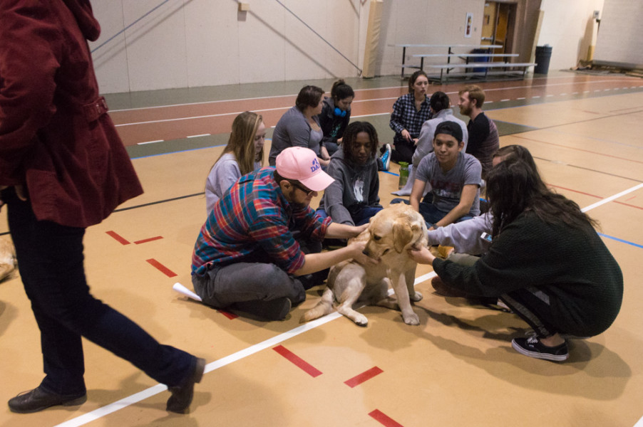 A dog sits among a group of students happily accepting a large amount of attention. Photo by Jennifer Rapinchuk.