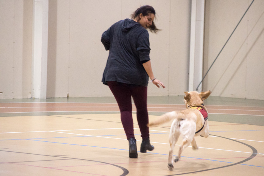 Many students meet the dogs with much enthusiasm before they are encouraged to keep the space calm and peaceful. Photo by Jennifer Rapinchuk.