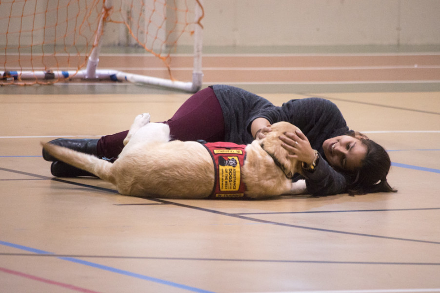 Just laying down with a dog can be enough to help a student find their happy place among the chaos of the week before finals. Photo by Jennifer Rapinchuk.